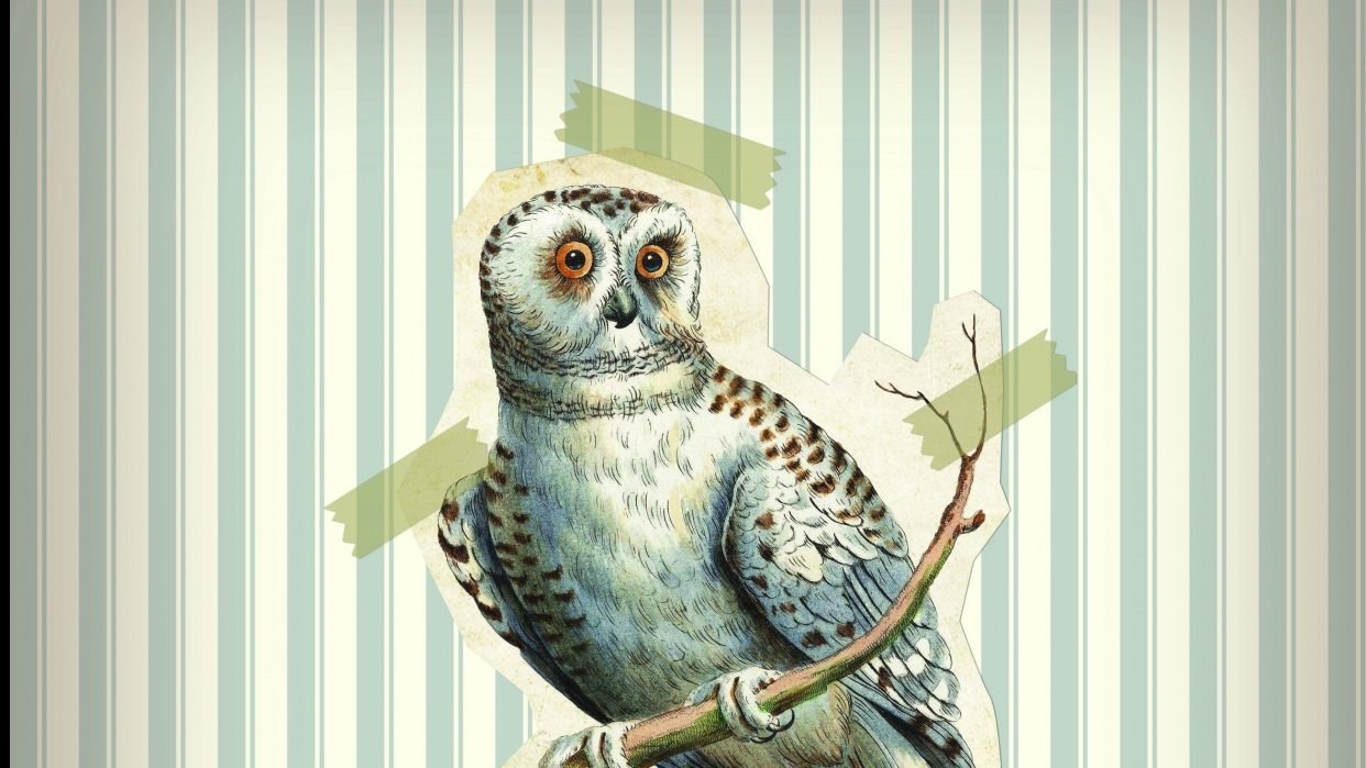 Vintage owl - student project