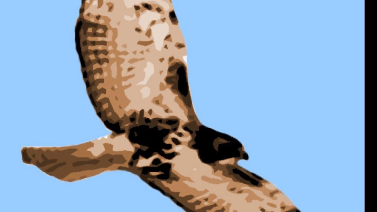 hawk - student project
