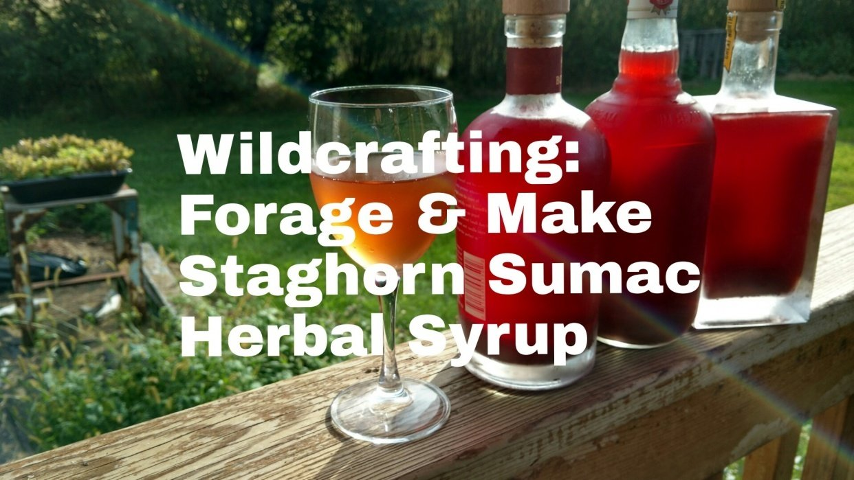 Wildcrafting: Forage & Make Health-Boosting Staghorn Sumac Herbal Syrup - student project