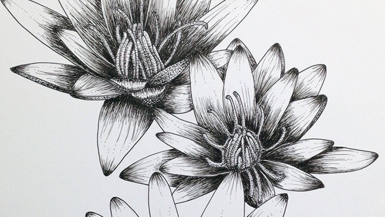 Penned Waterlilies + Poppies - student project