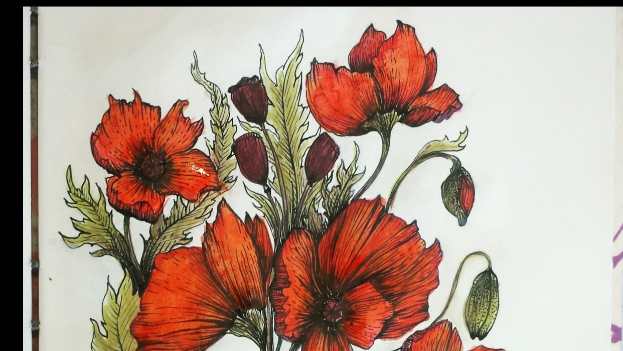 Pen and Ink Poppies - student project