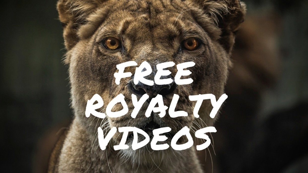 Learn to Get Free HD Royalty videos for Business - student project