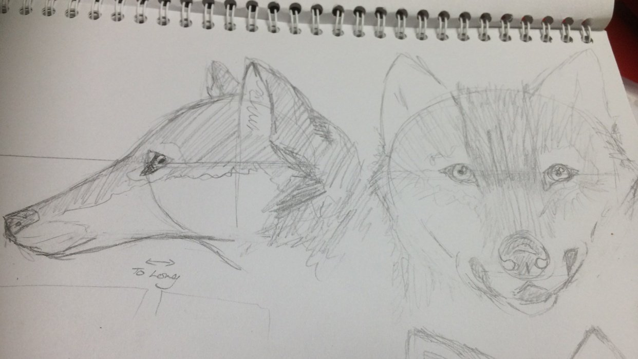 Variety of Animal Drawings - student project