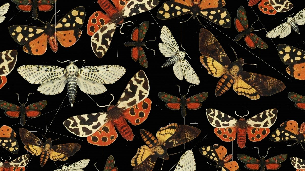 Night butterfly pattern - student project