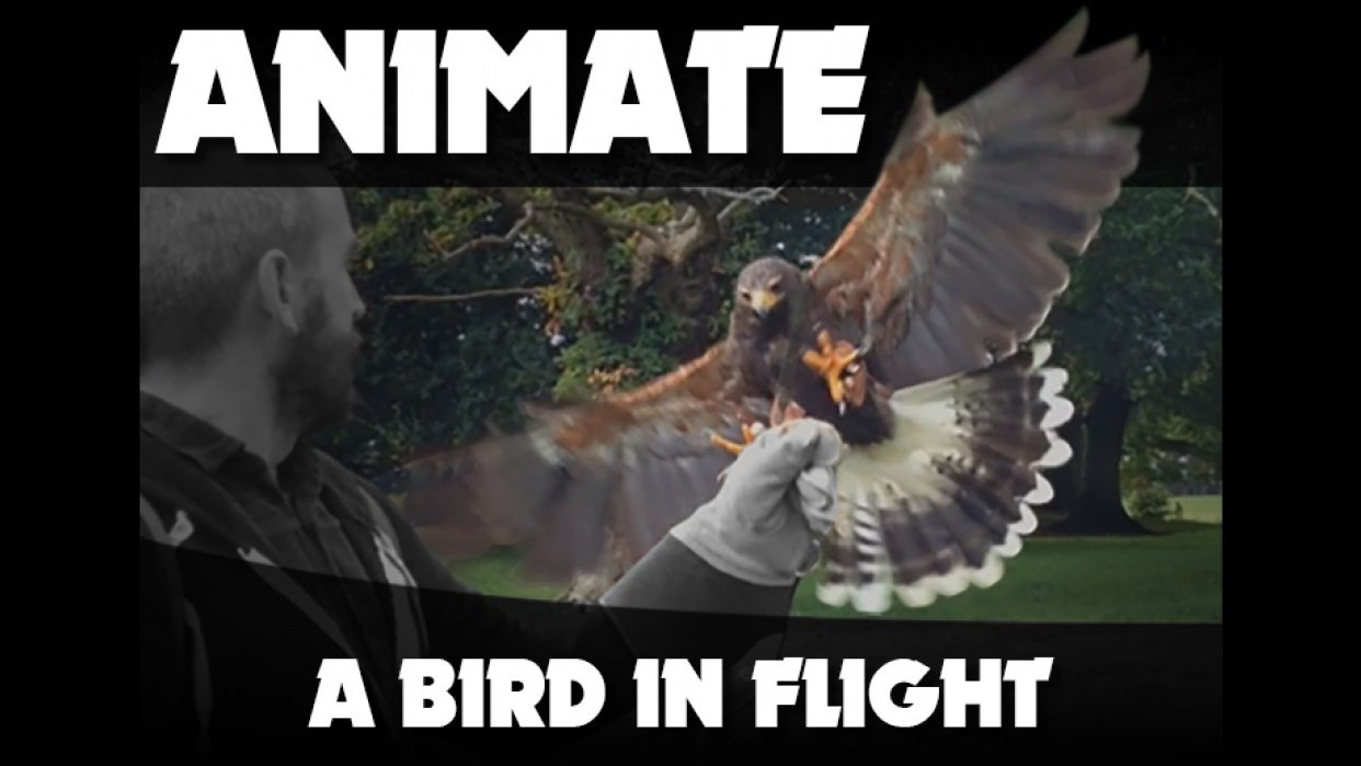 Animate a Bird in Flight - student project
