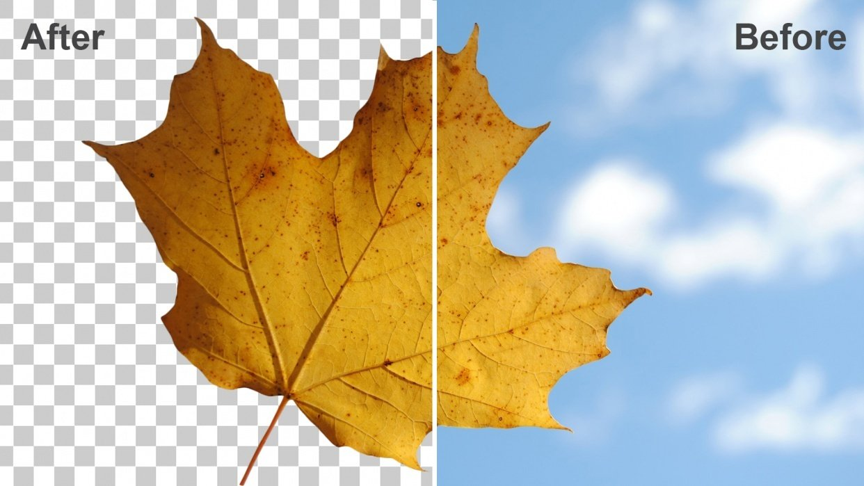 My Leaf Isolated from the Background (Sample Project) - student project