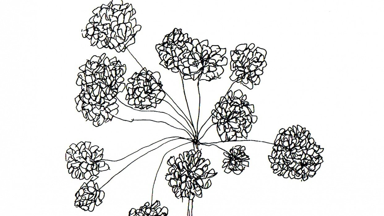 Botanical - student project