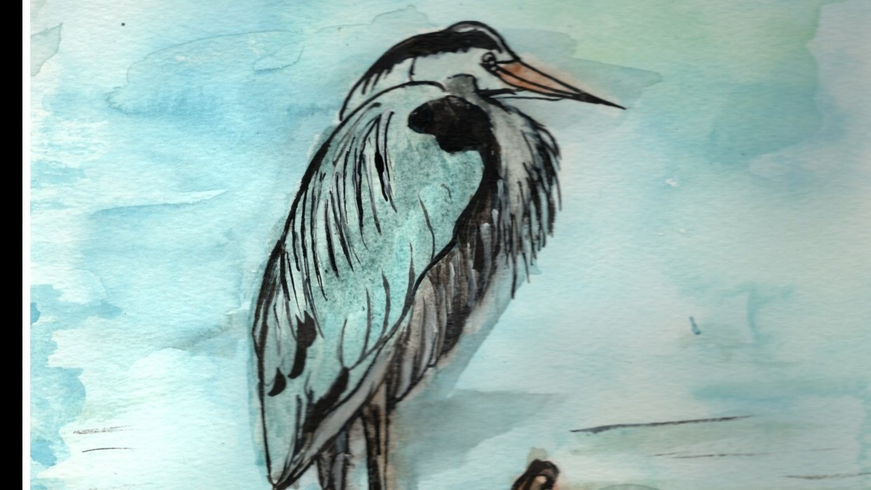 Great Blue Heron - Westcoast Canada  - student project
