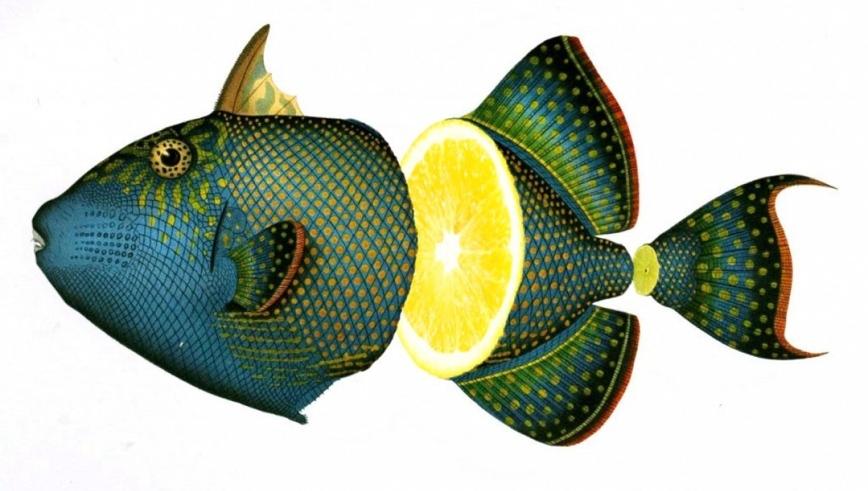 Photoshop: Fruity fish collage - student project
