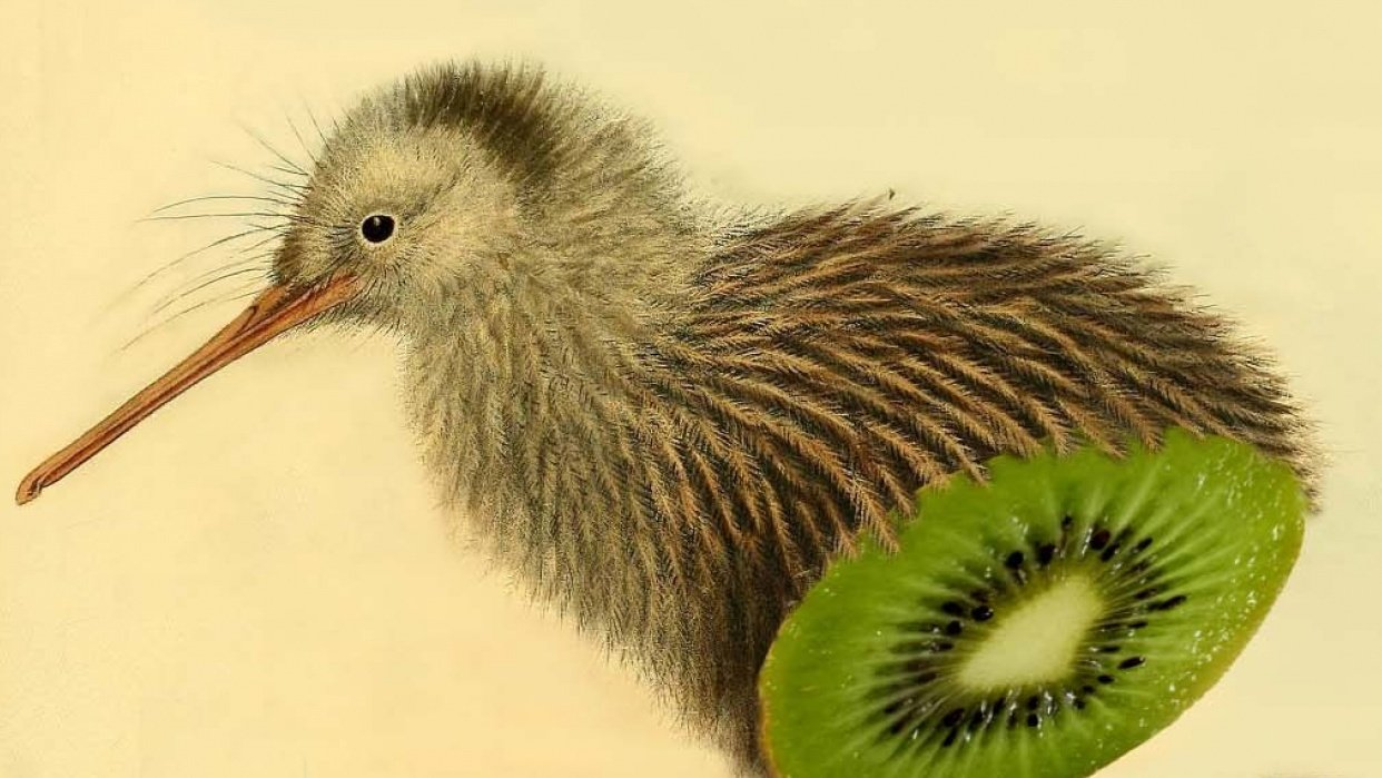 I cut a kiwi, but it was only kiwi inside... - student project