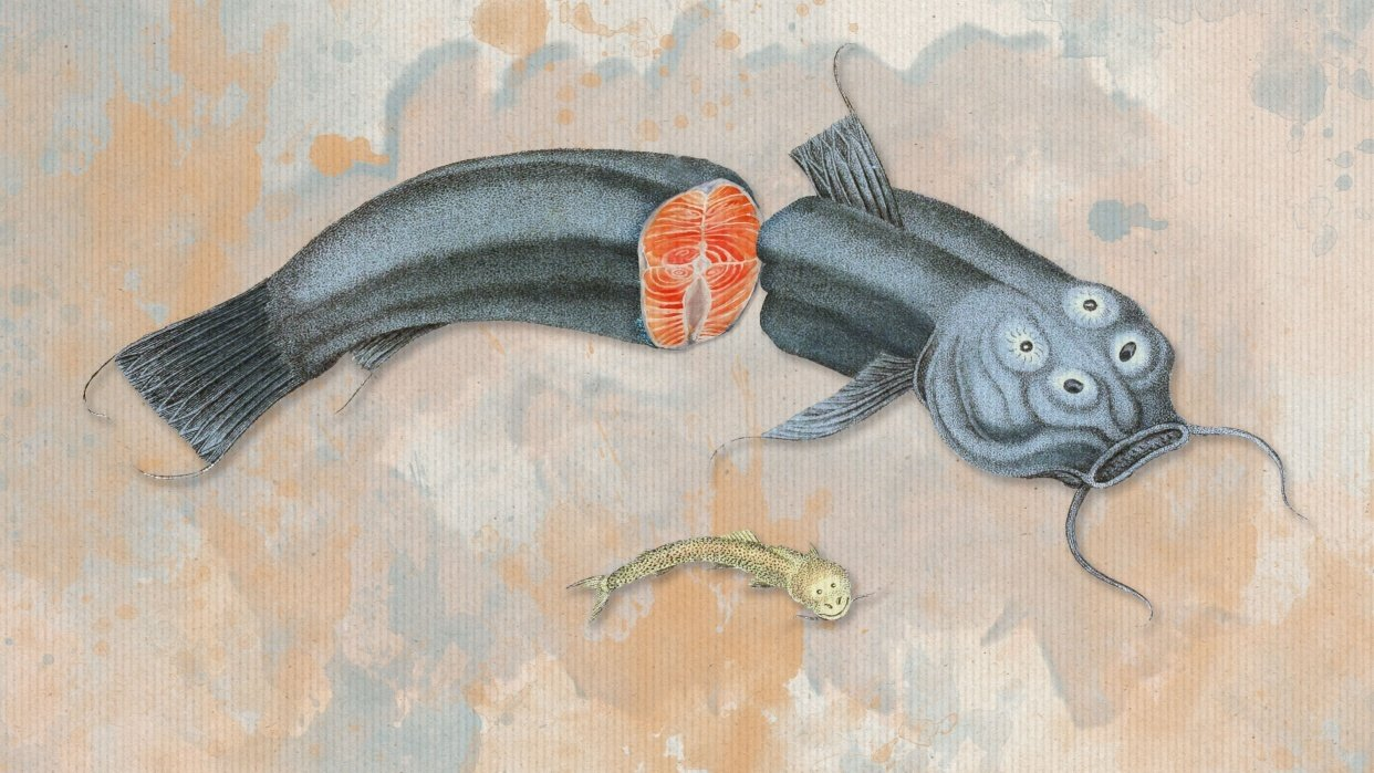 Surreal collage Fish Couvier 1834 - student project