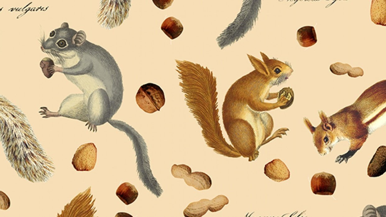 Photoshop Digital Pattern: Nuts For Squirrels - student project