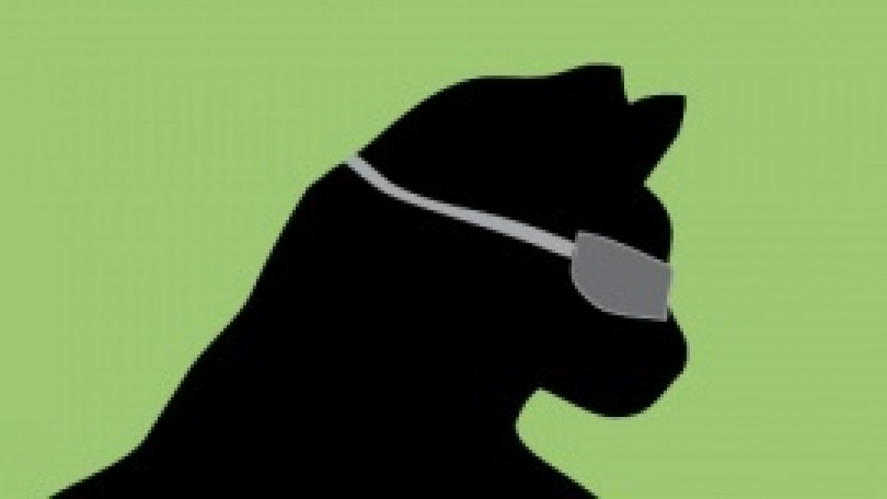 Cat Scientist - student project