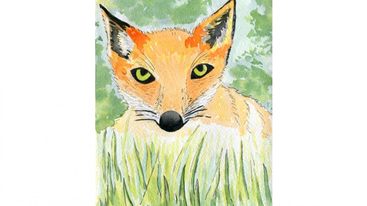 Fox in the grass - student project