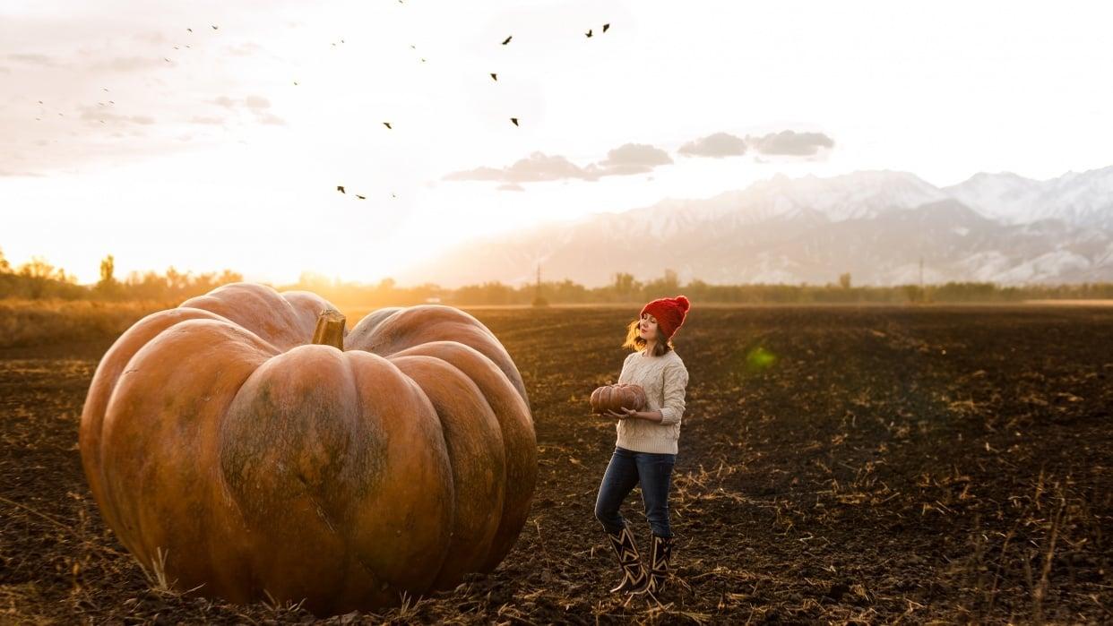 Sample pumpkin project - student project