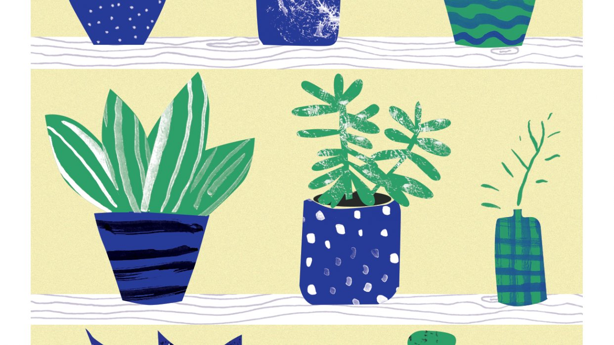 Cactus and indoor plants - student project