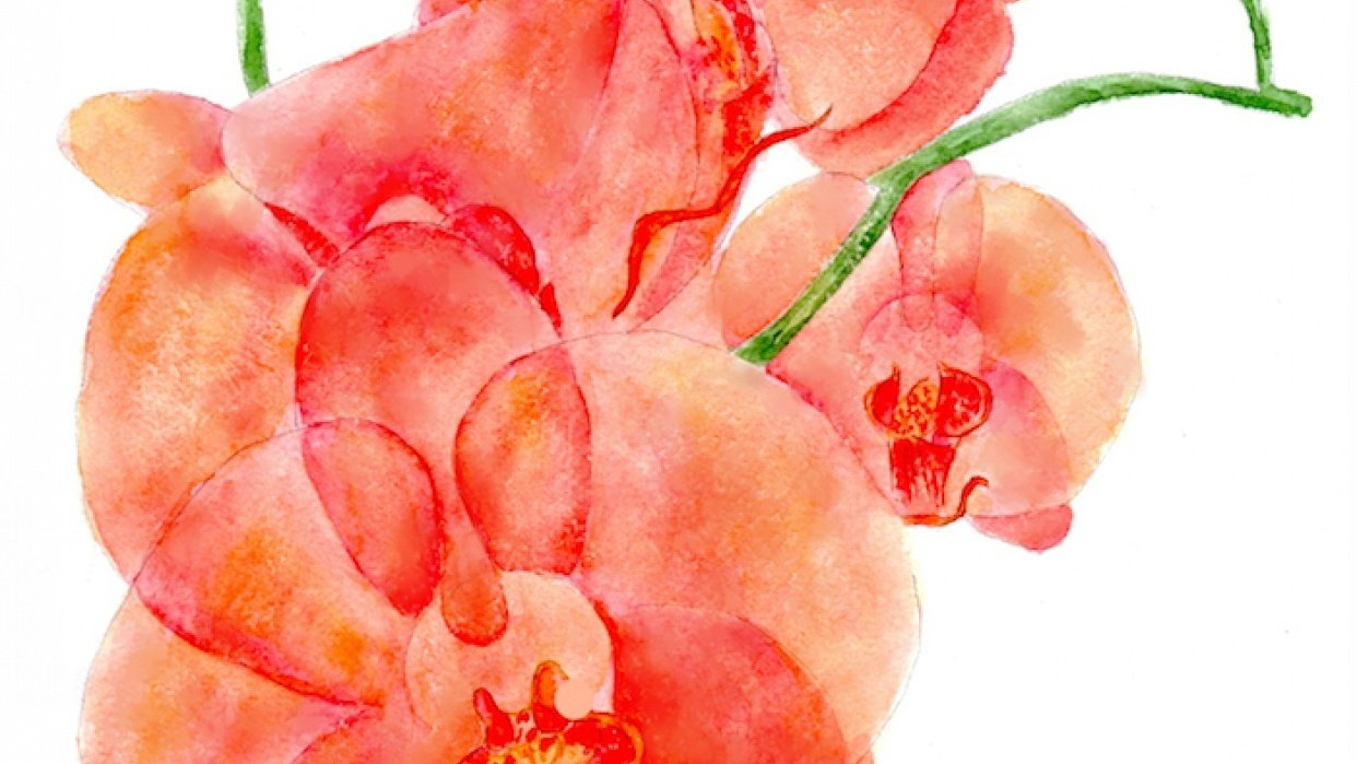 Orchids, watercolor painting - student project