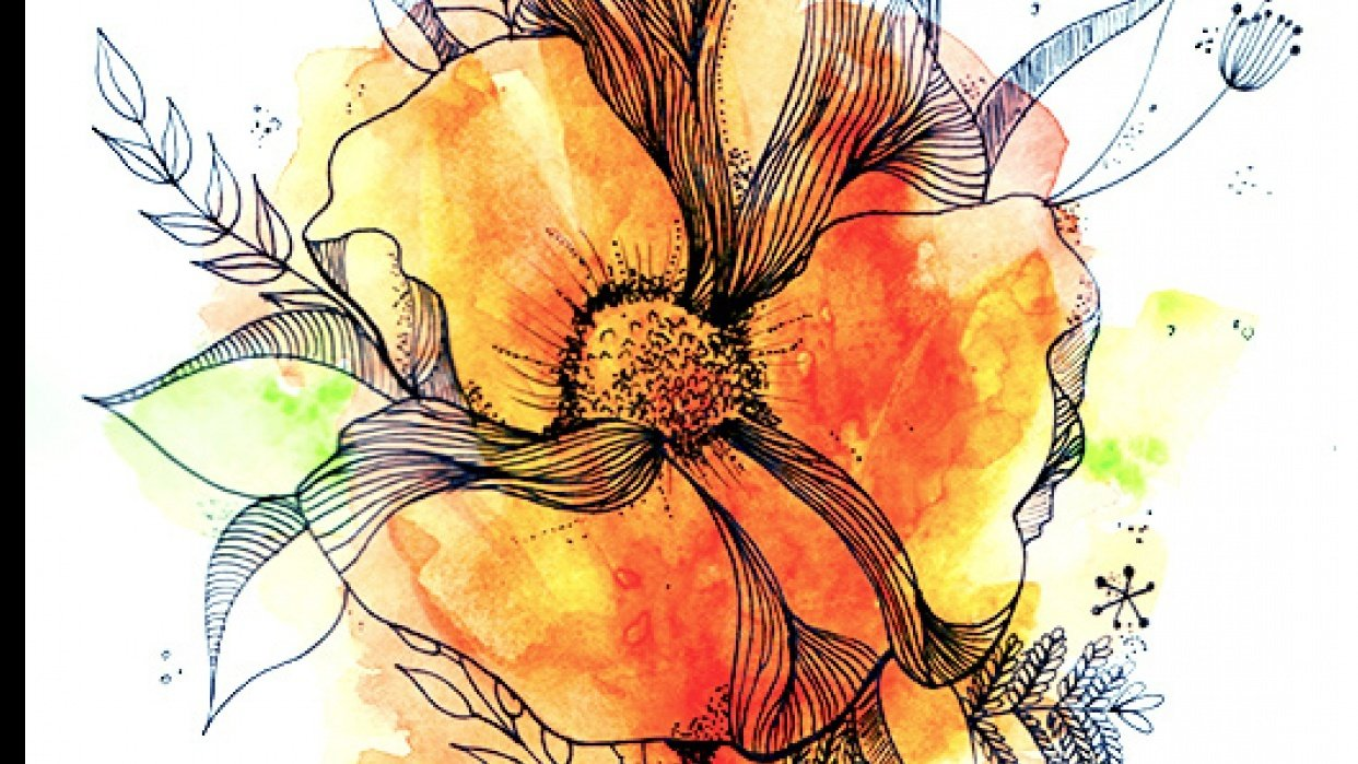 Botanical Line Drawing with water colour - student project