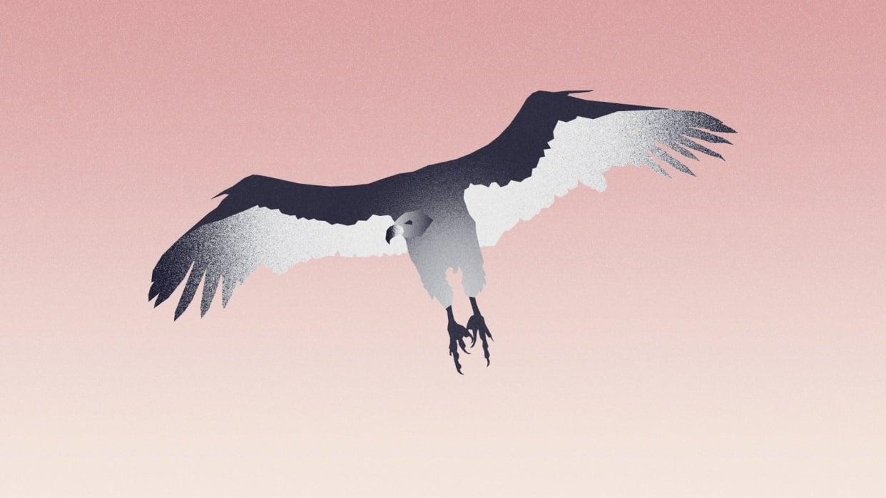 Animal Kingdom - student project