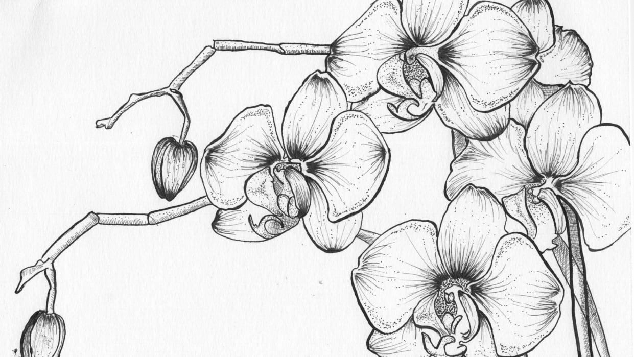 Pen & Ink Irises - student project