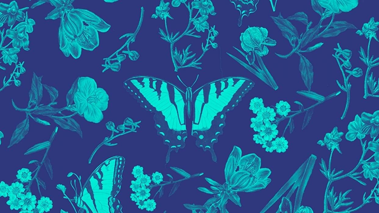 Flowers & Butterflies - student project