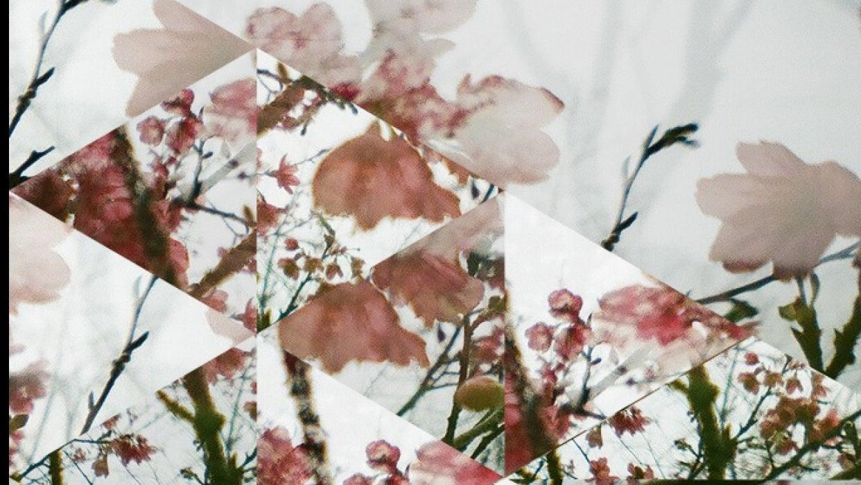 Sakura  - student project