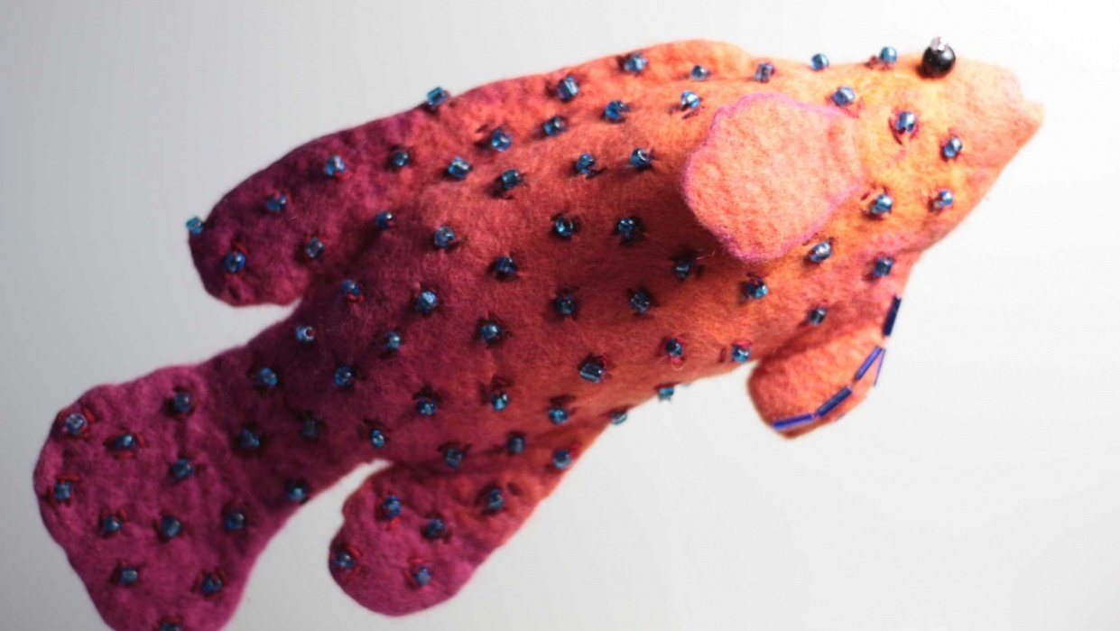Coral Cod - student project