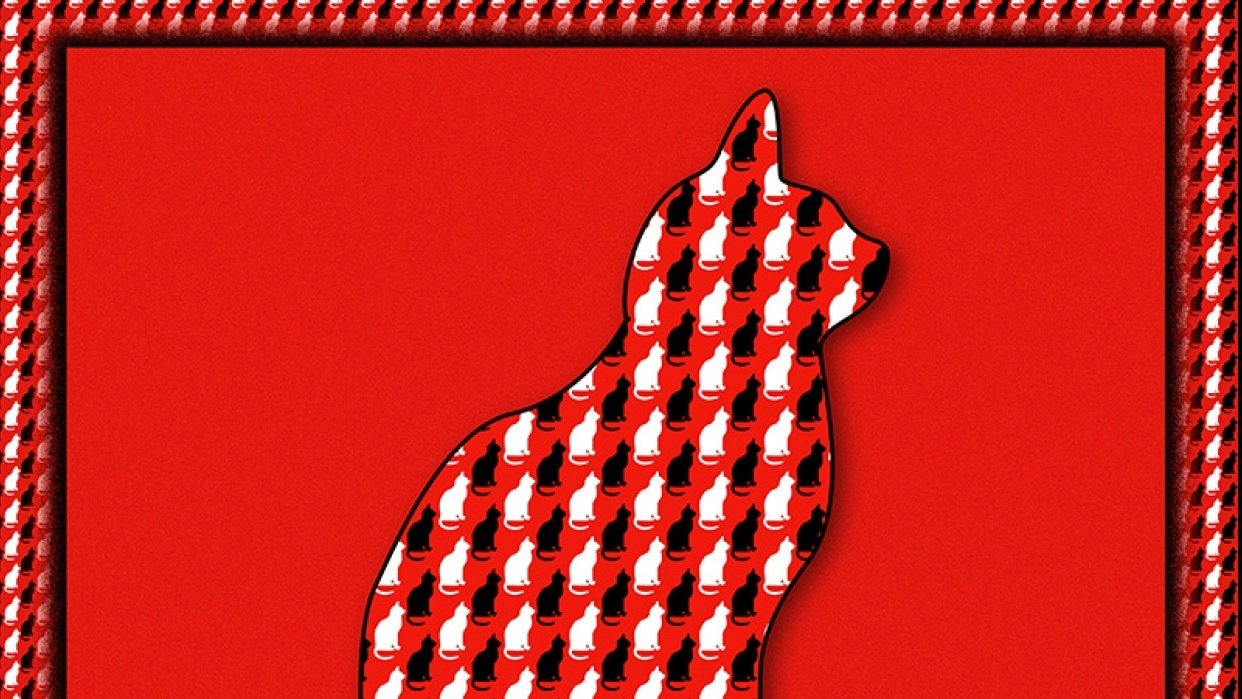 Cats on red - student project