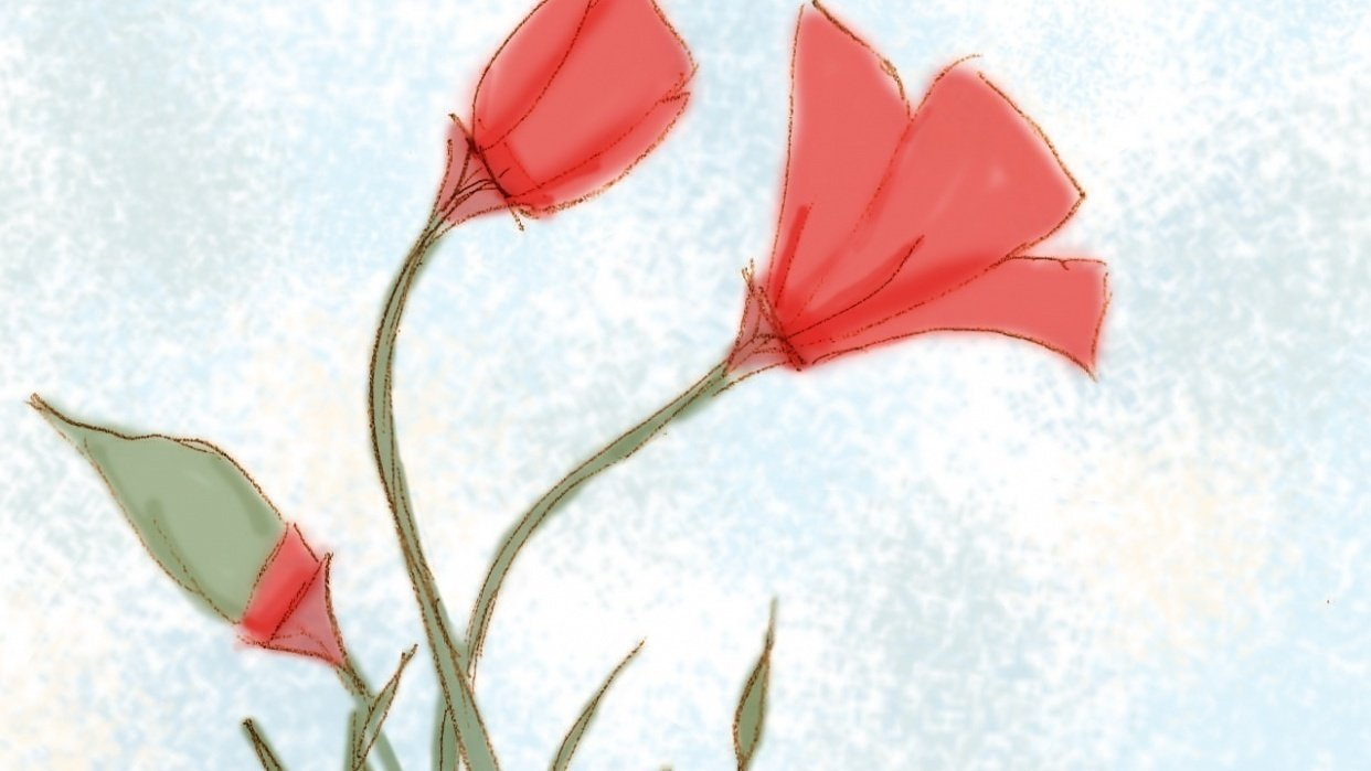 Colored Sketch - Poppies - student project