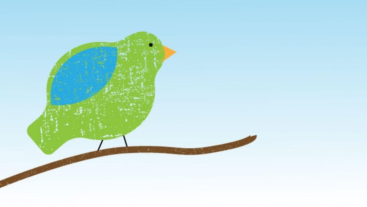 Bird Texture - student project