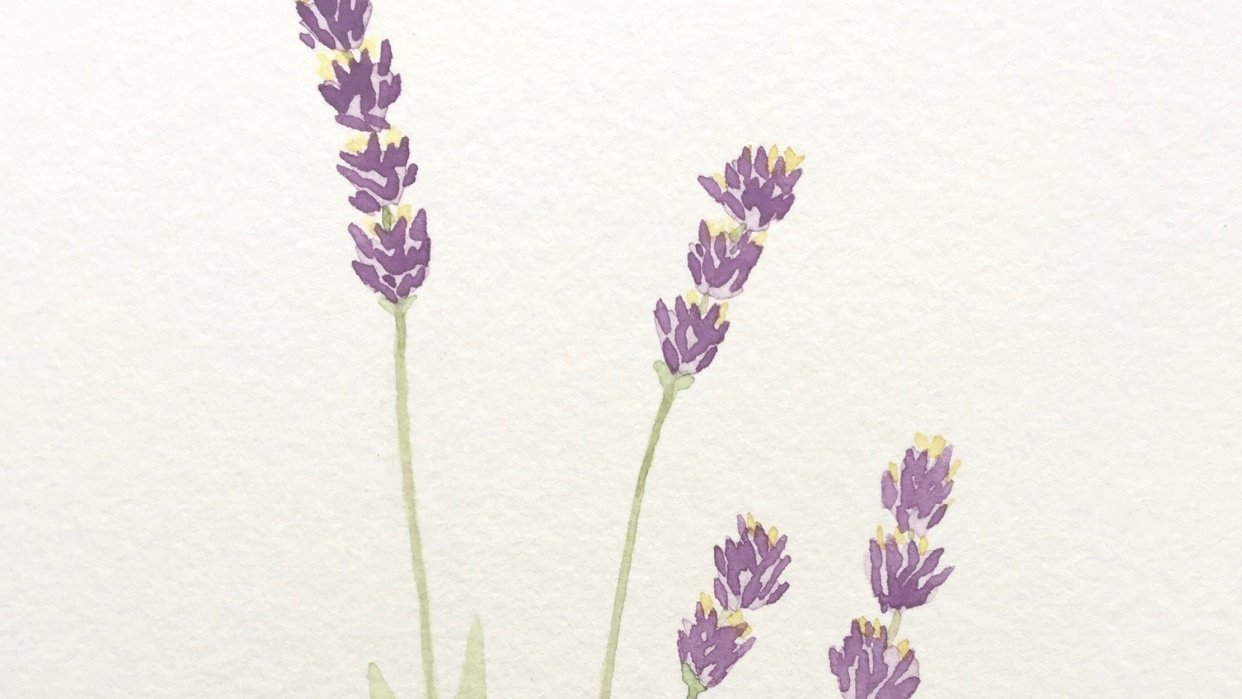 Lavender Watercolor Paintings - student project