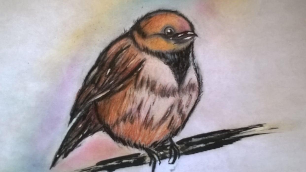 little bird - student project