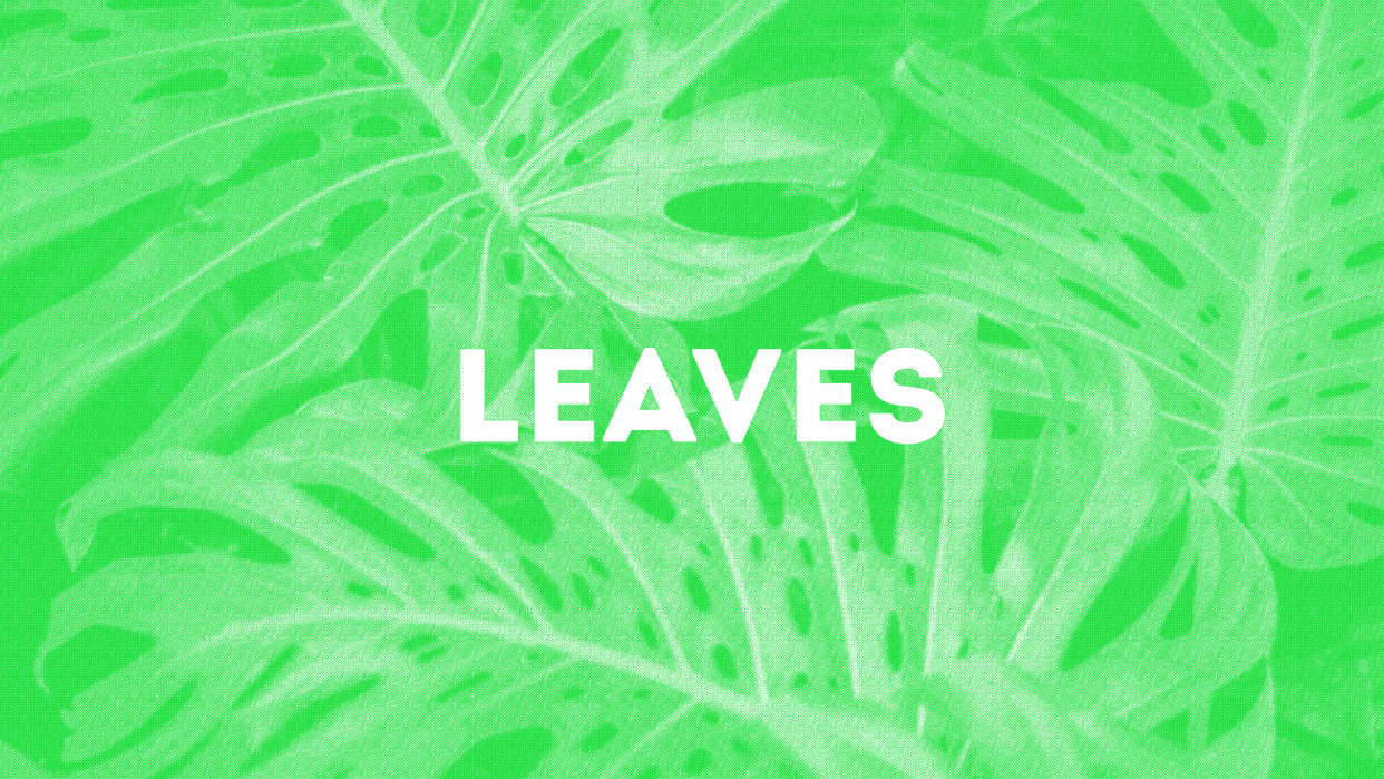 Leaves Risograph - student project