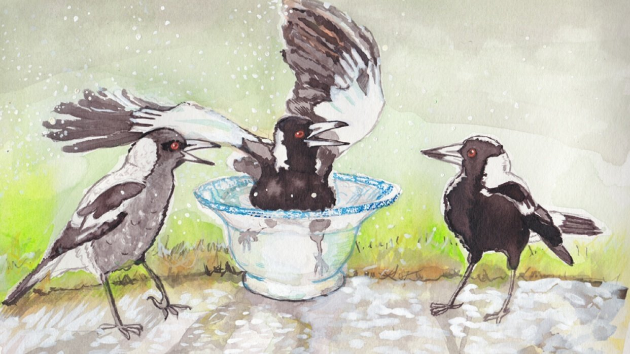 Magpies - student project