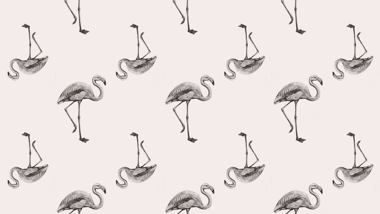 Flamingoes - student project