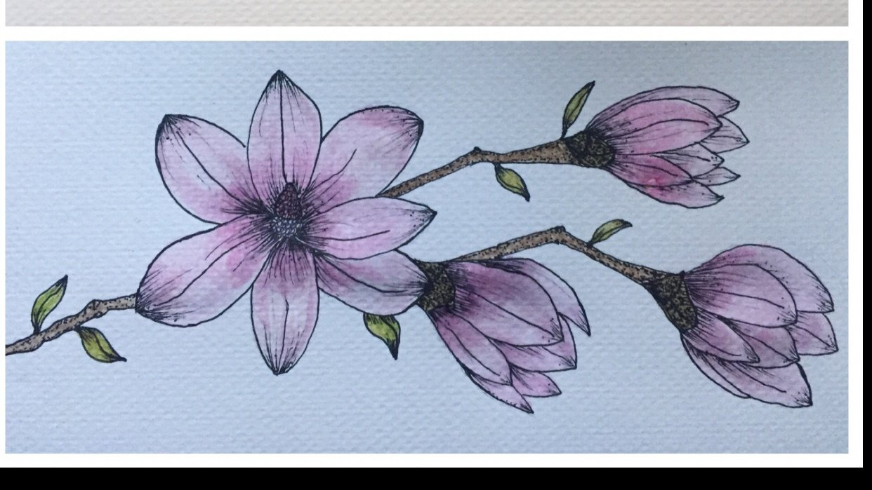 Pink Magnolia - student project