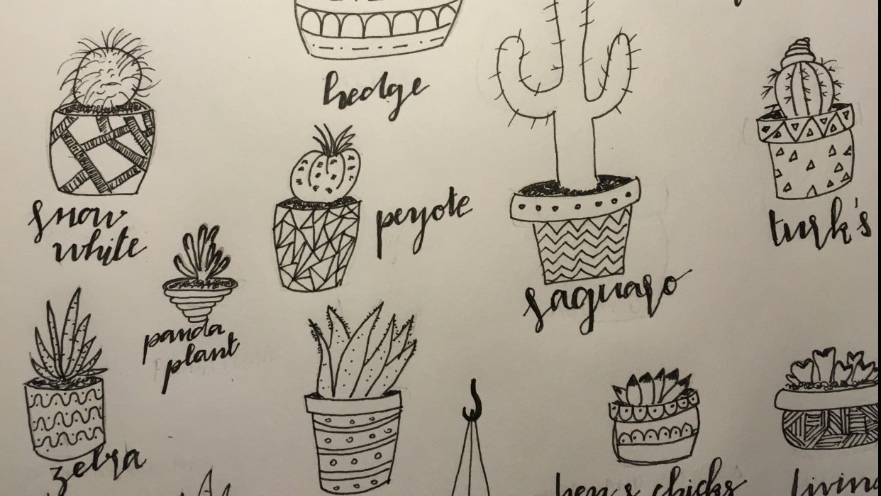 Drawing cactus...  - student project