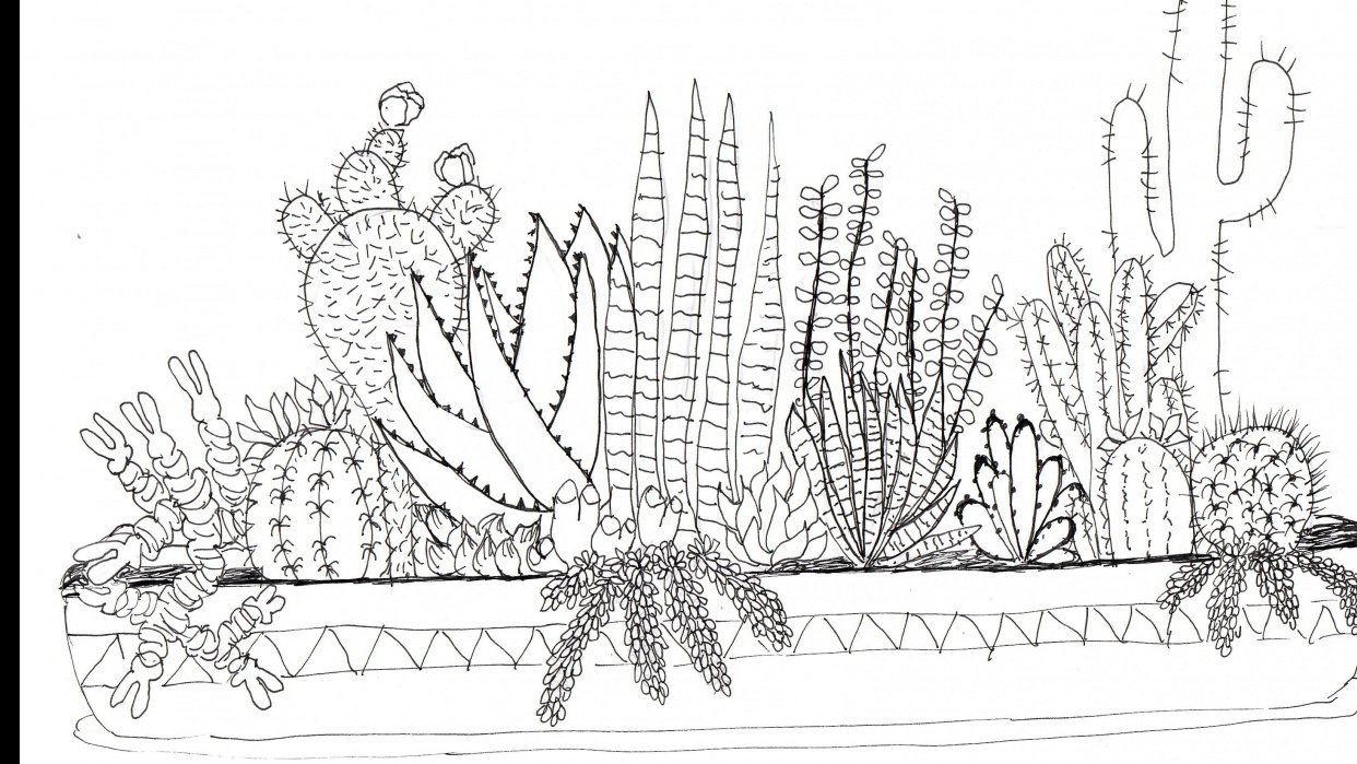 Practice Practice Practice Cactus cactus cactus. - student project