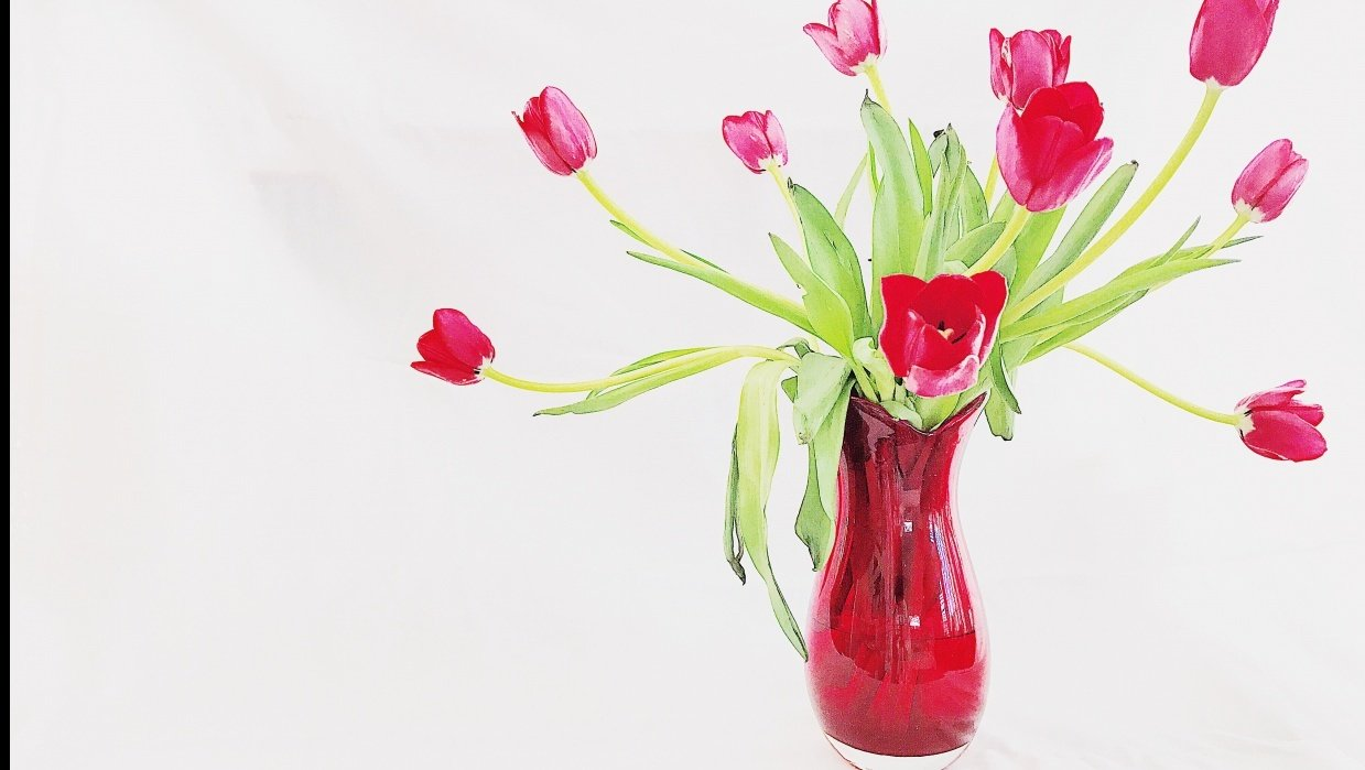 Red Tulips - student project