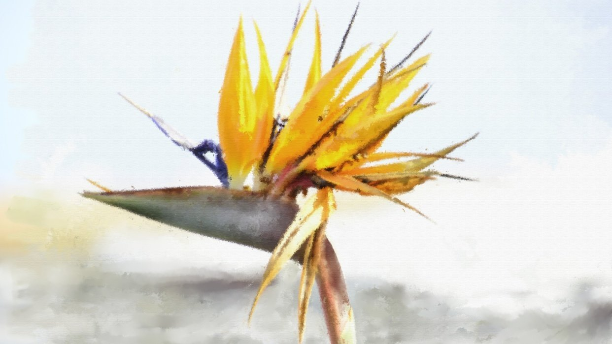 Bird of Paradise - student project