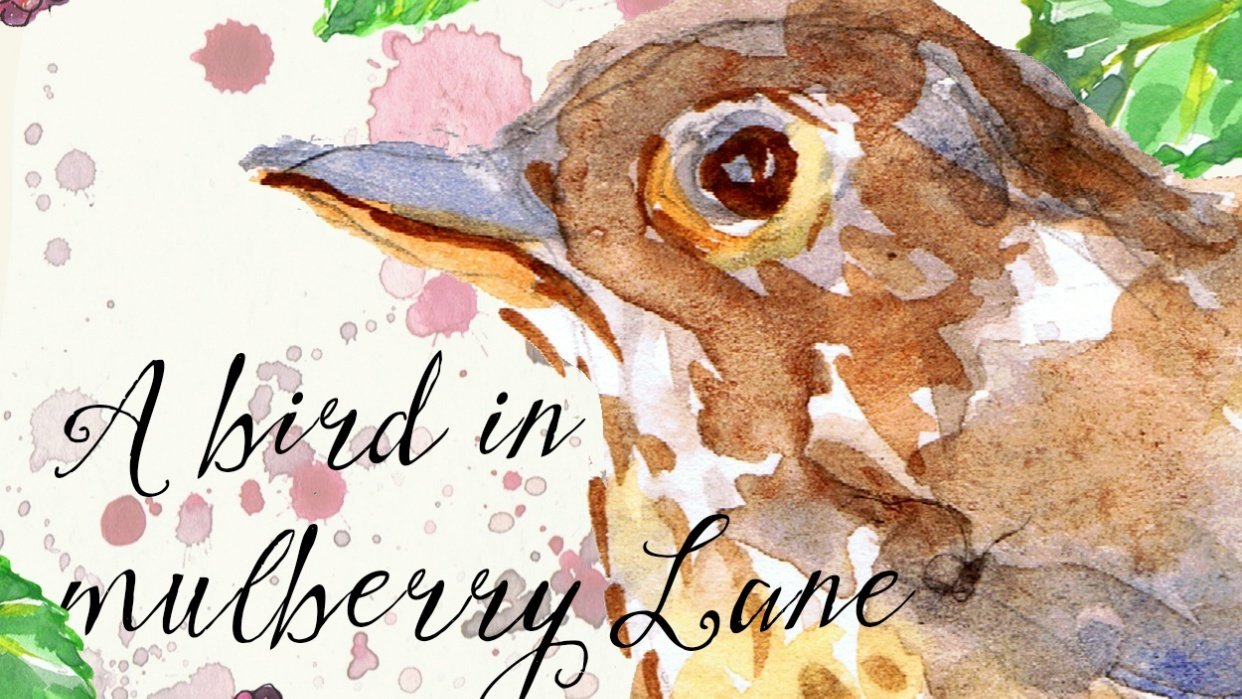 A Bird in Mulberry Lane - student project