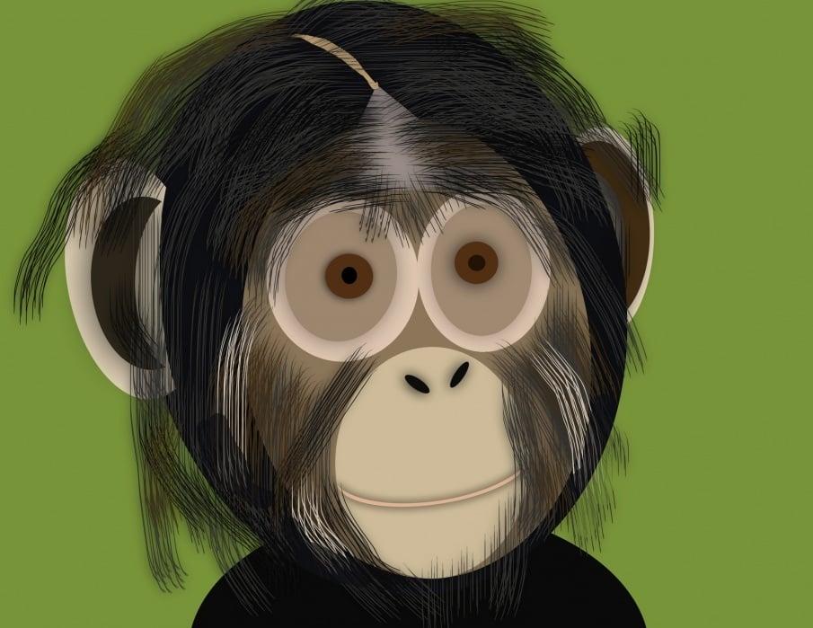Chimp - student project