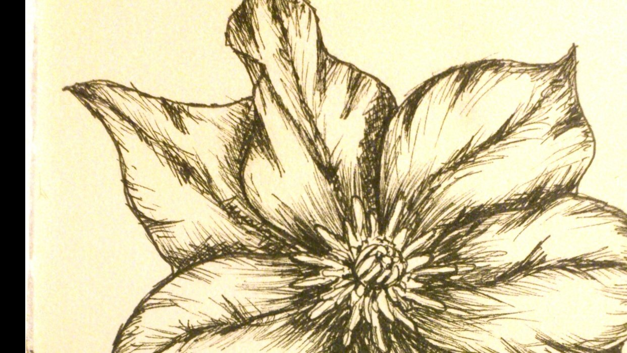 Clematis - student project