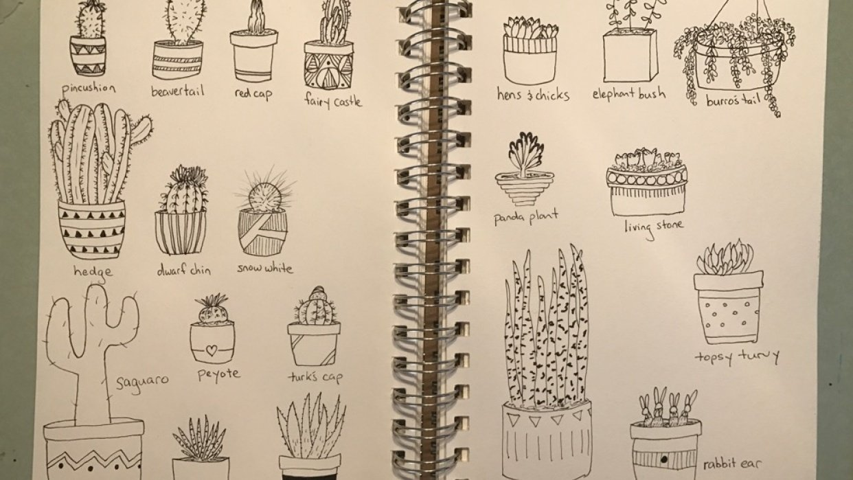 Cacti Drawings - student project
