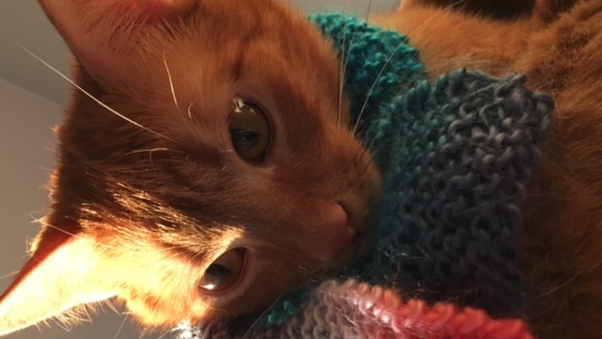 A scarf for my cat - student project