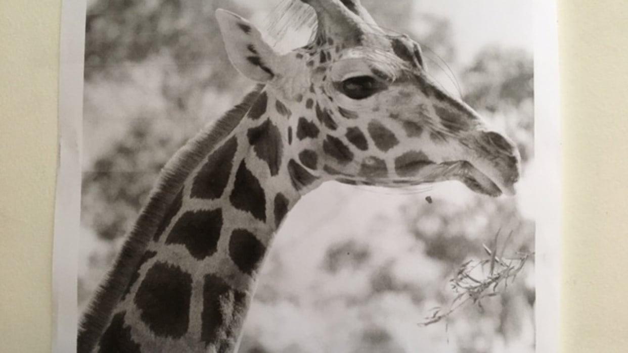 Giraffe - student project