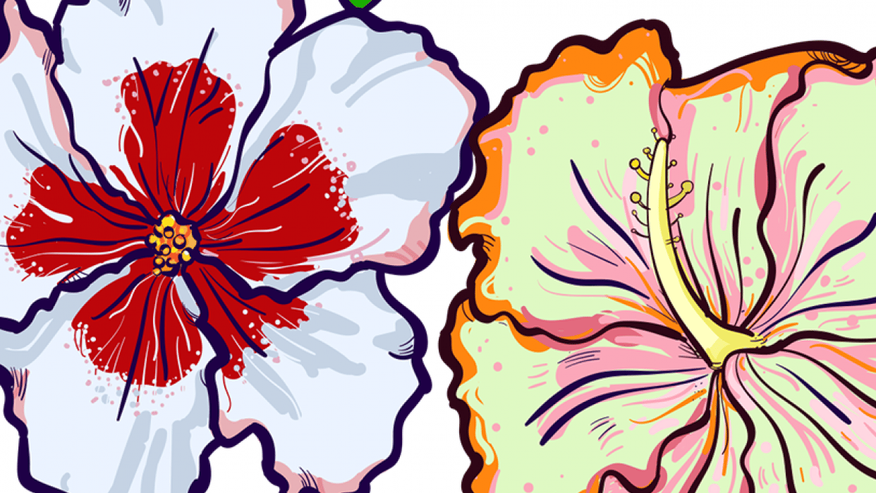 Hibiscus - student project