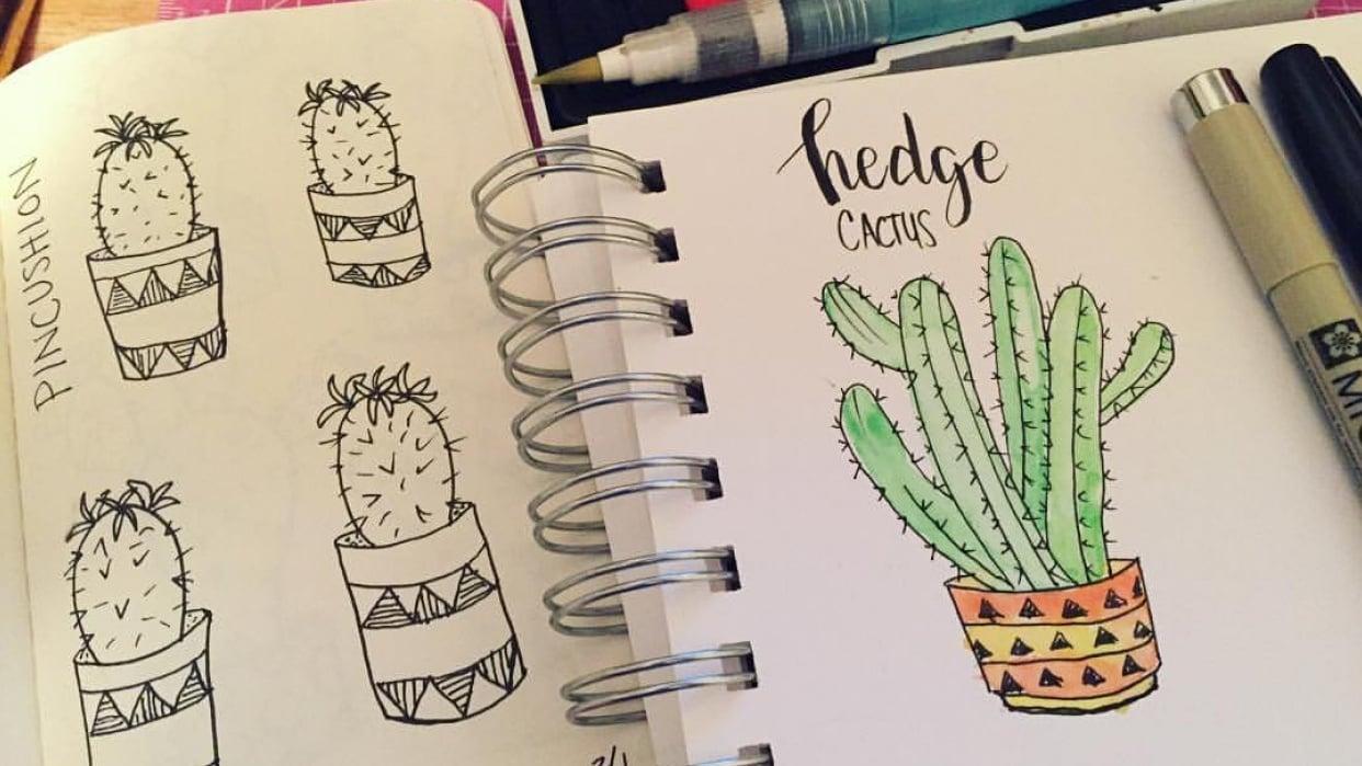 Cacti & Succulents  - student project