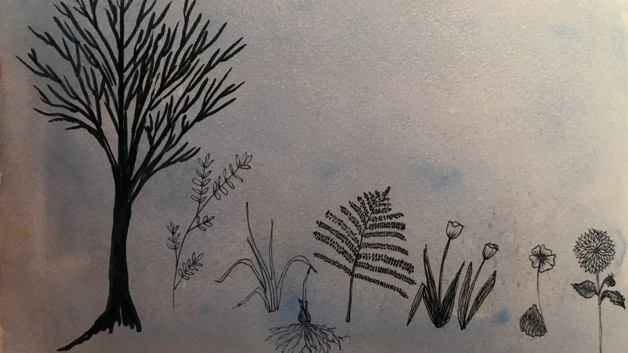botanical line drawings - student project