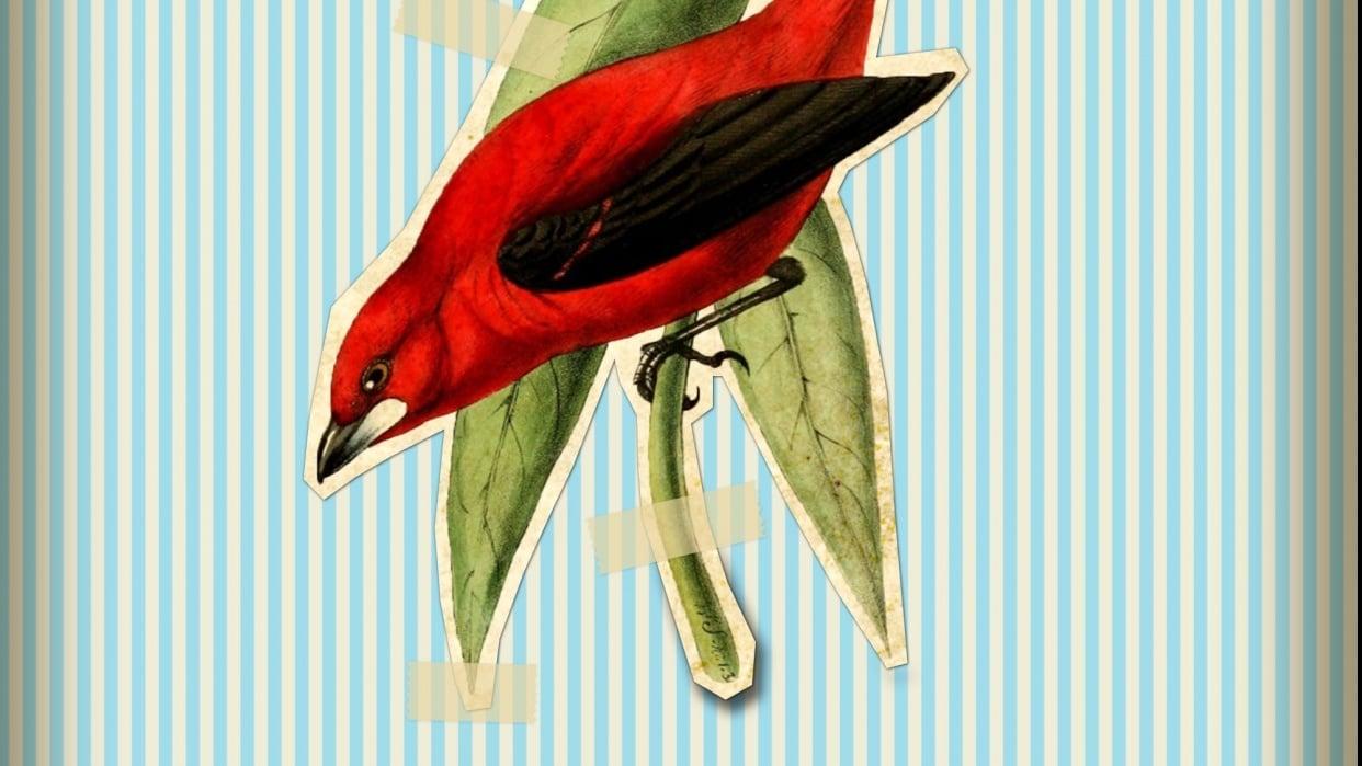 Vintage Bird - student project